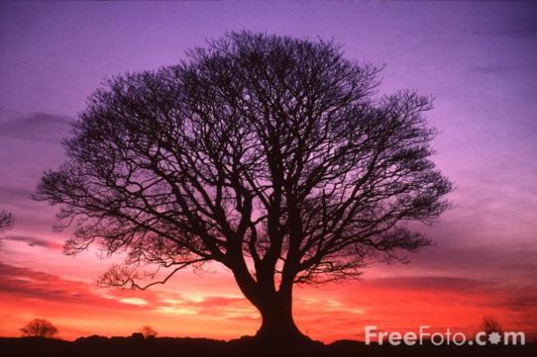 15_19_1---Tree--Sunrise--Northumberland_web