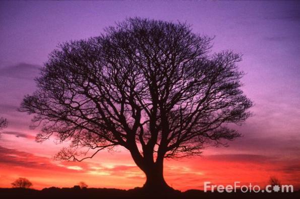 15_19_1---Tree--Sunrise--Northumberland_web